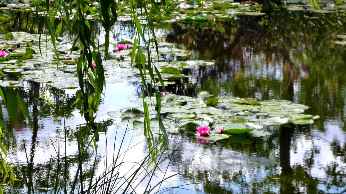Monetovy lekníny v Giverny