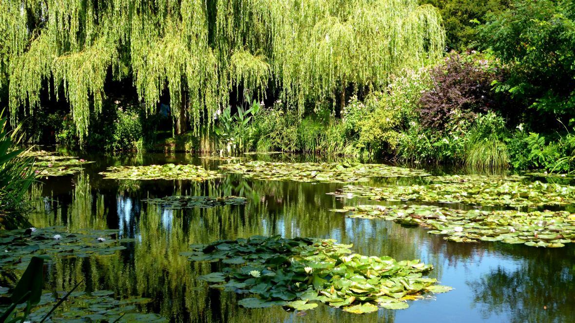 Jezírko v Monetově zahradě v Giverny