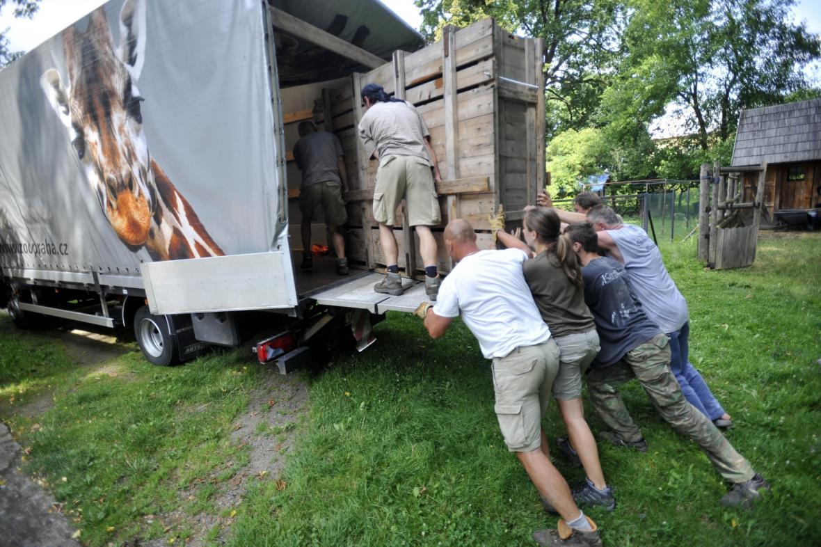 Pár koní Převalského se stěhuje ze Slatiňan do chovné stanice v Dolním Dobřejově