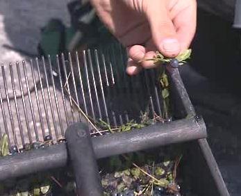 Hřeben na sběr borůvek