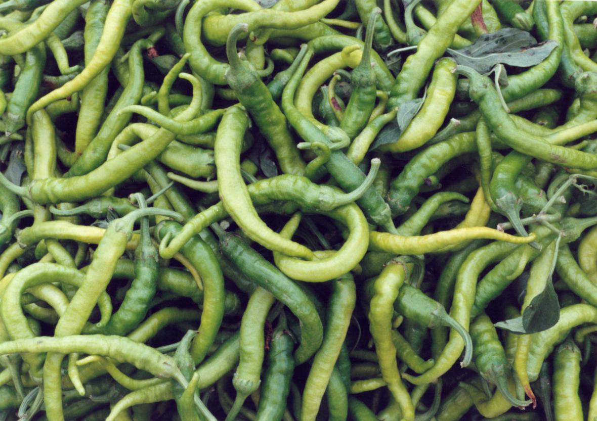 Chilli papriček existují stovky druhů