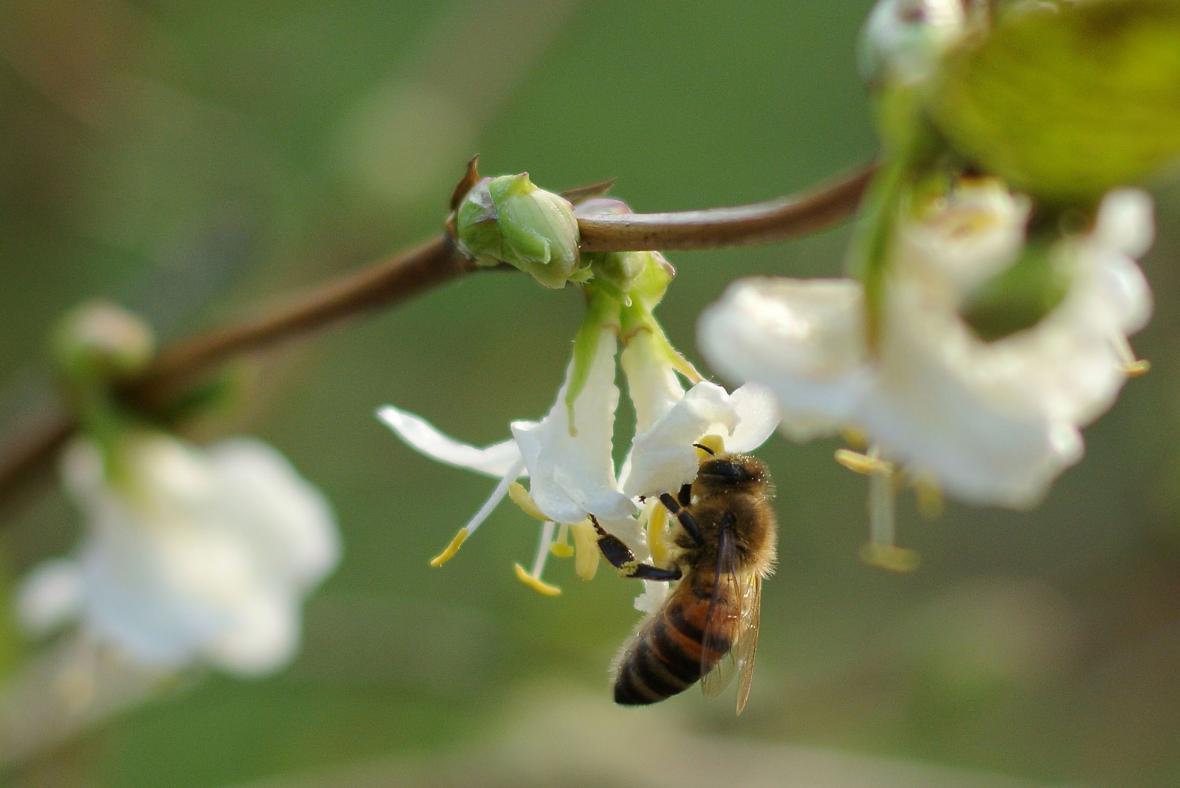 Extrémně teplo je v celé Evropě, v německém Kolíně vylétly včely