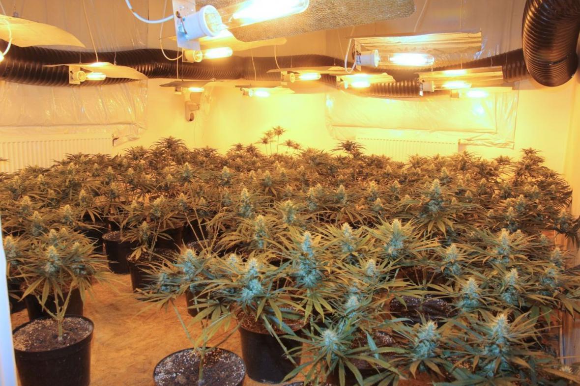 Velkopěstírna marihuany