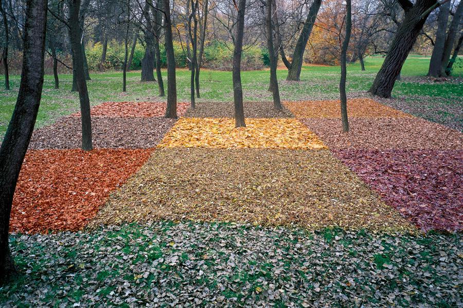 Lesní koberec pro náhodného houbaře, Praha-Stromovka (z výstavy Czechscape)