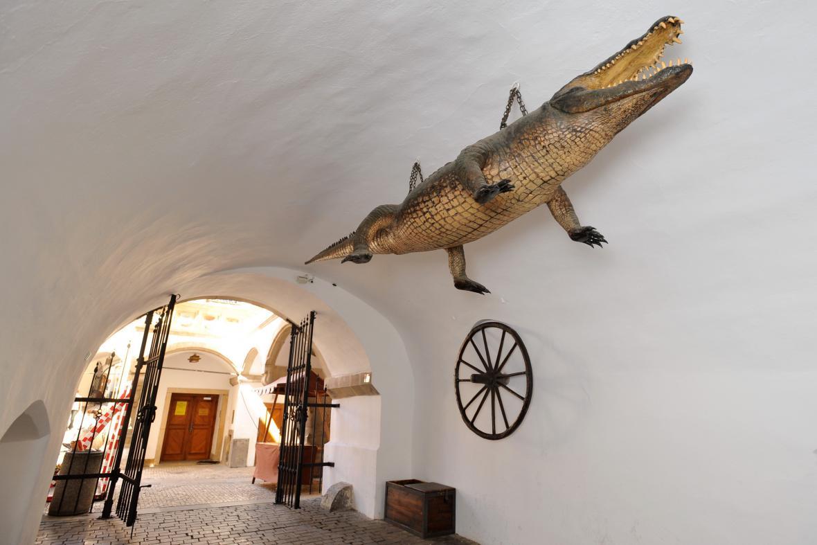 Brněnský drak a kolo na Staré radnici