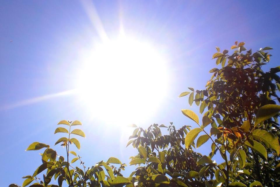 Odpoledne na Znojemsku. Teplota ve stínu 32 °C