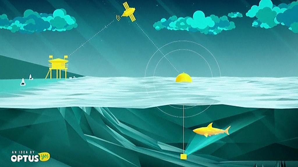 Princip bójky hlídající pohyb žraloků