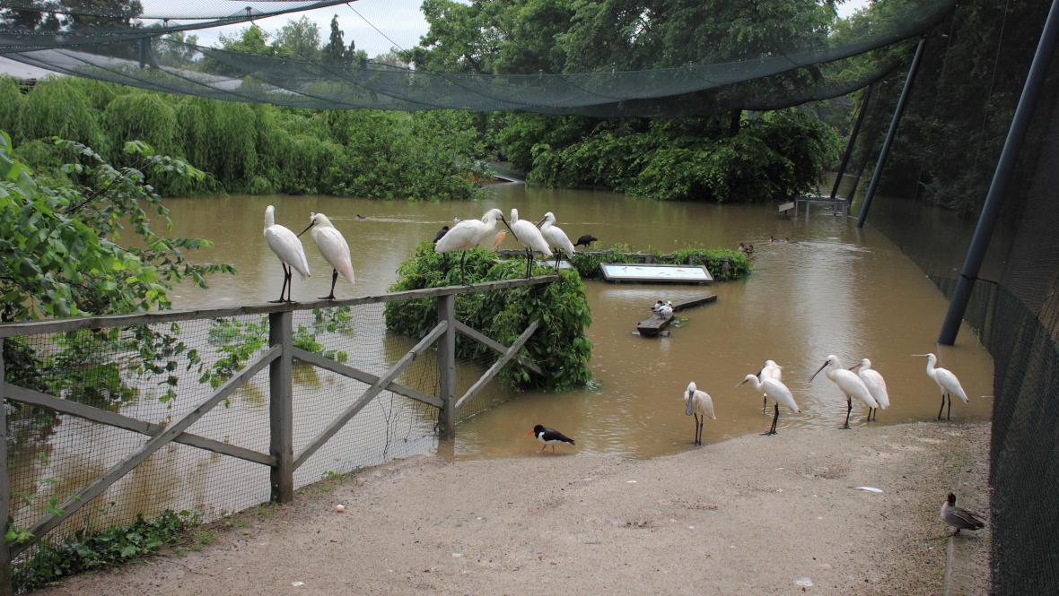 Kolpíci v zatopené pražské zoo