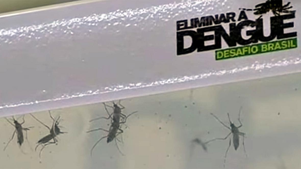 Horečka dengue