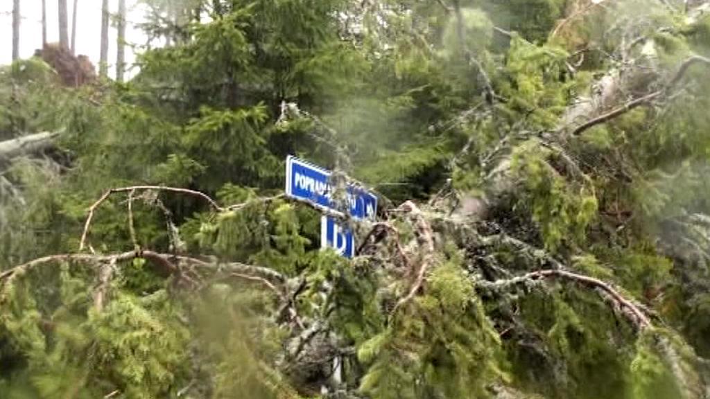 Popadané stromy komplikují na Slovensku dopravu