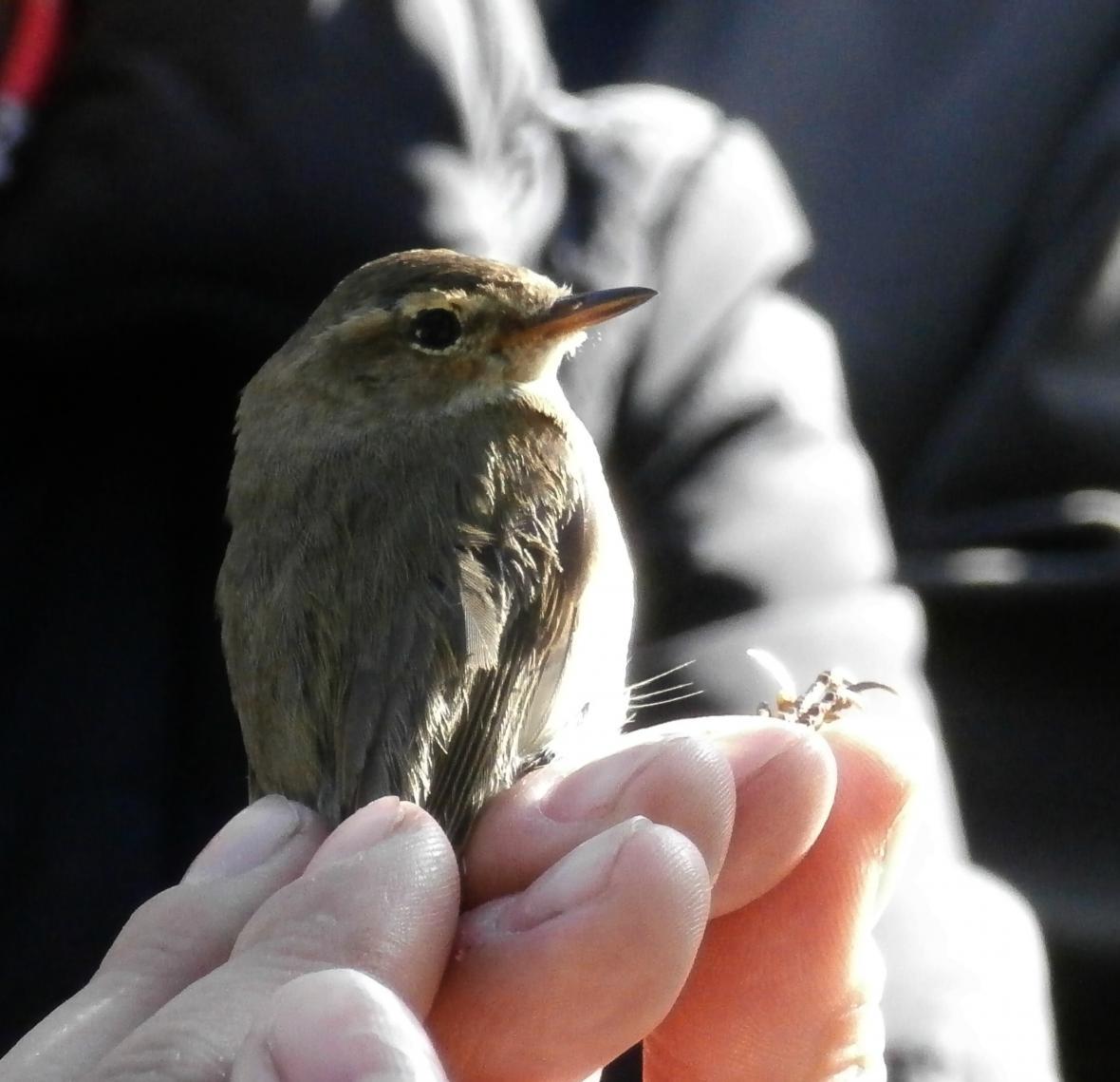 Vítání ptačího zpěvu - Koštice