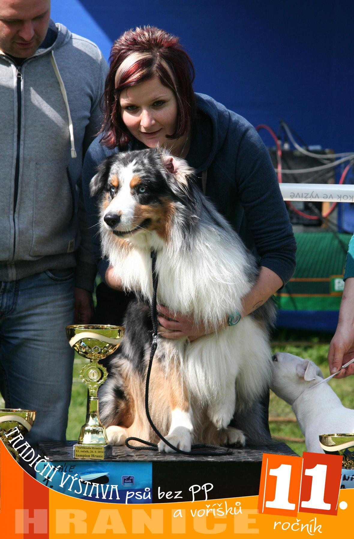 Nejkrásnější pes bez PP