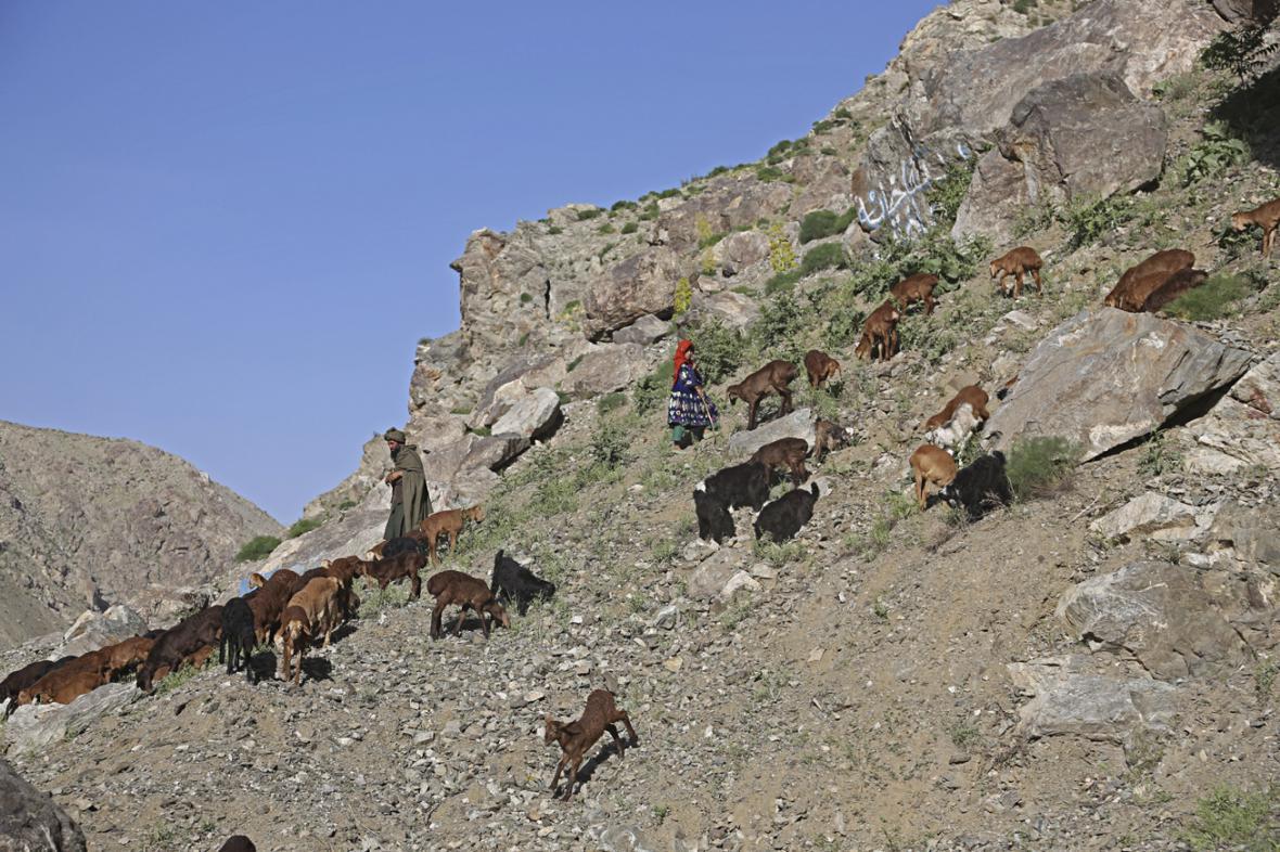 Afghánští pastevci