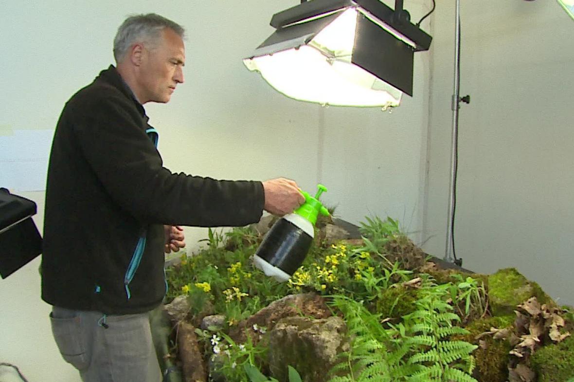 Zmenšenou verzi biotopů v Moravském krasu vytváří botanici