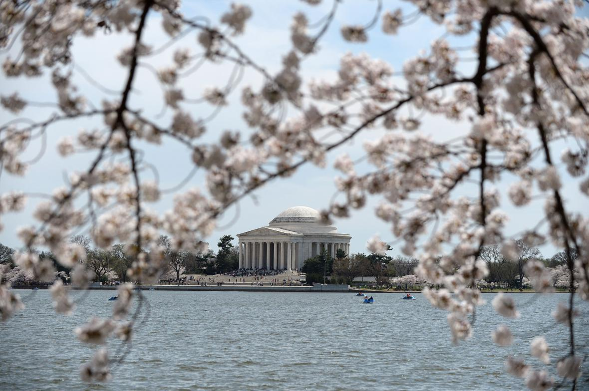 Rozkvetlé sakury ve Washingtonu