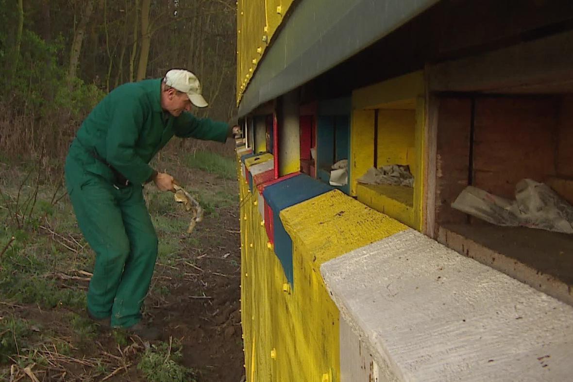 Stěhování včelích úlů