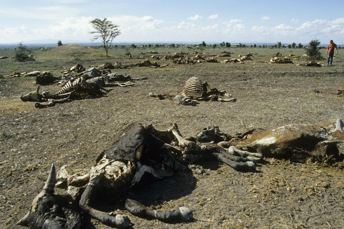 Smrtící sucho v Africe