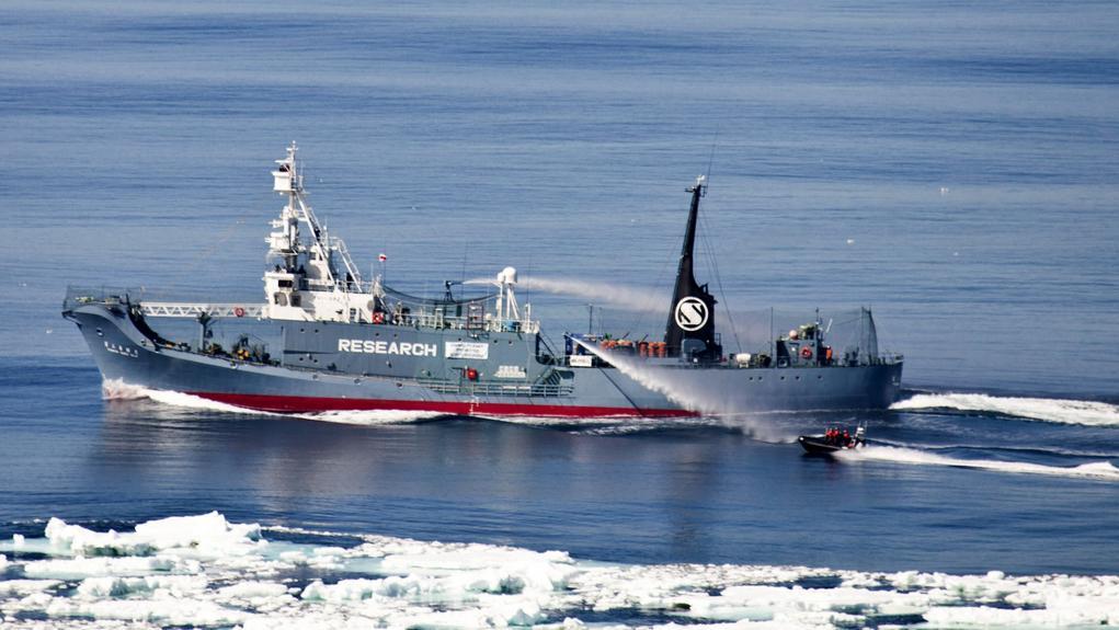 Japonští velrybáři manévrují vodním dělem proti aktivistům ze Sea Shepherd