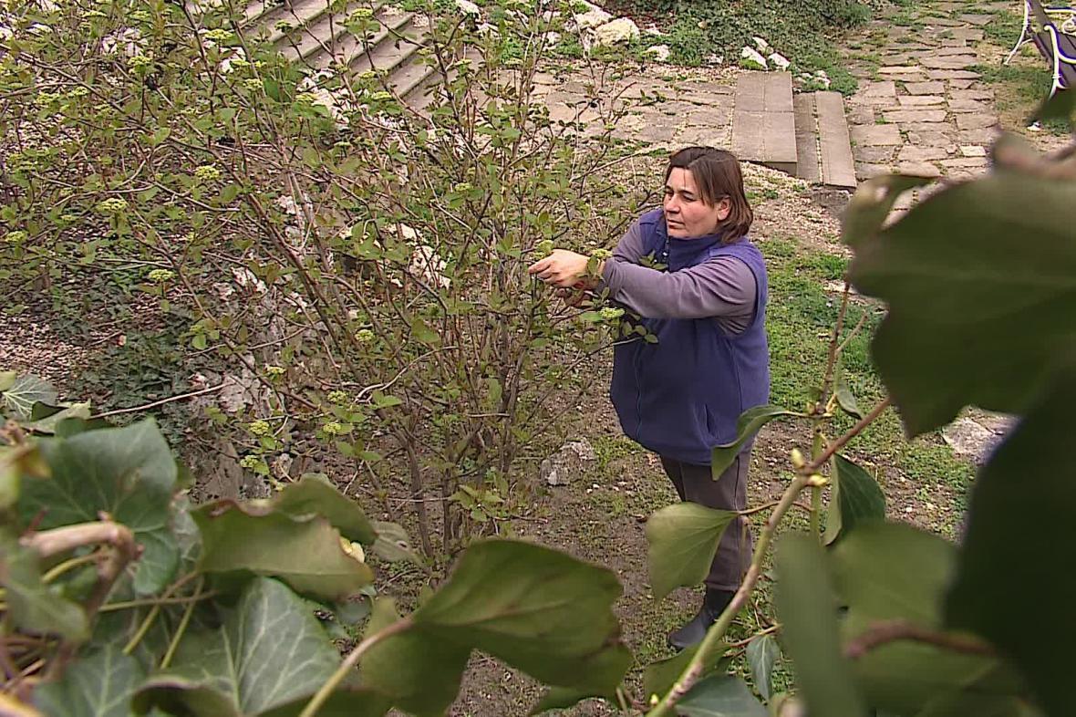 Obnova zámecké zahrady začne na konci jara
