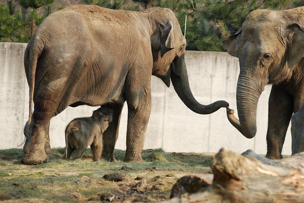 Ostravští sloni
