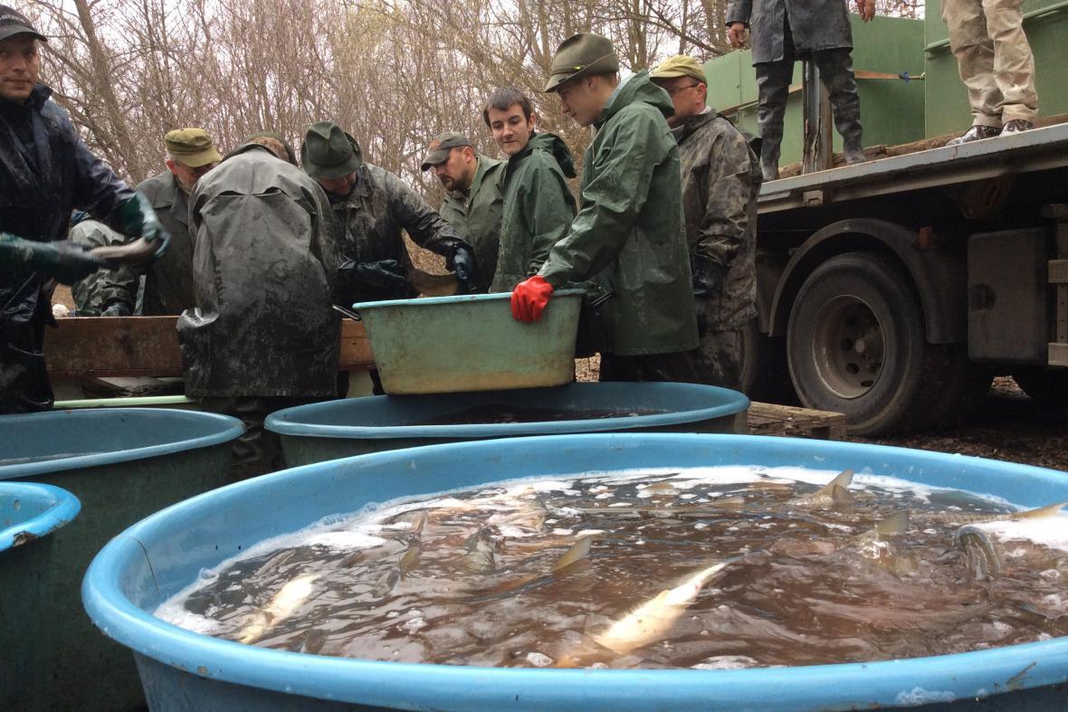 Přelov jedovnického rybníka