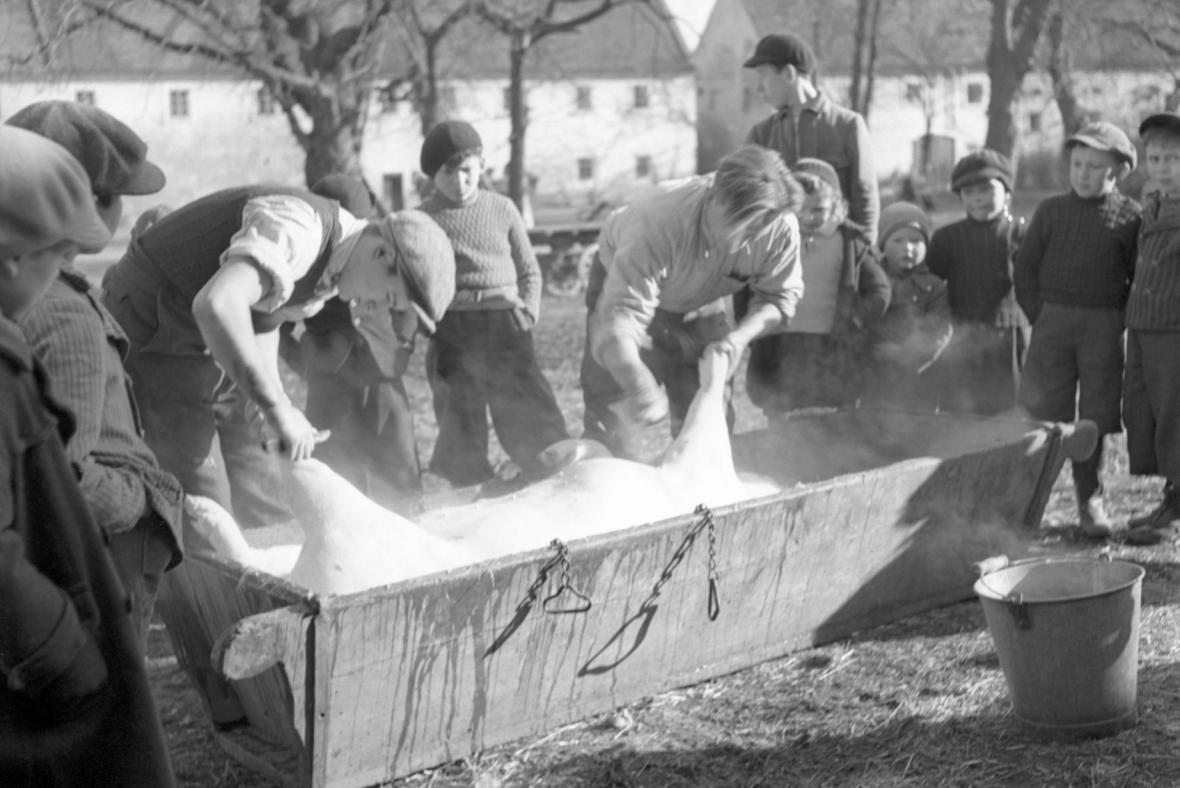 Zabijačka (2.2.1939)