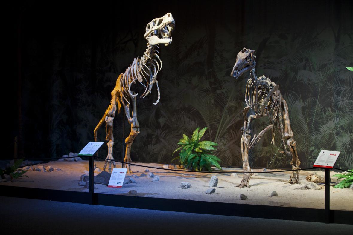 Výstava Dinosarium