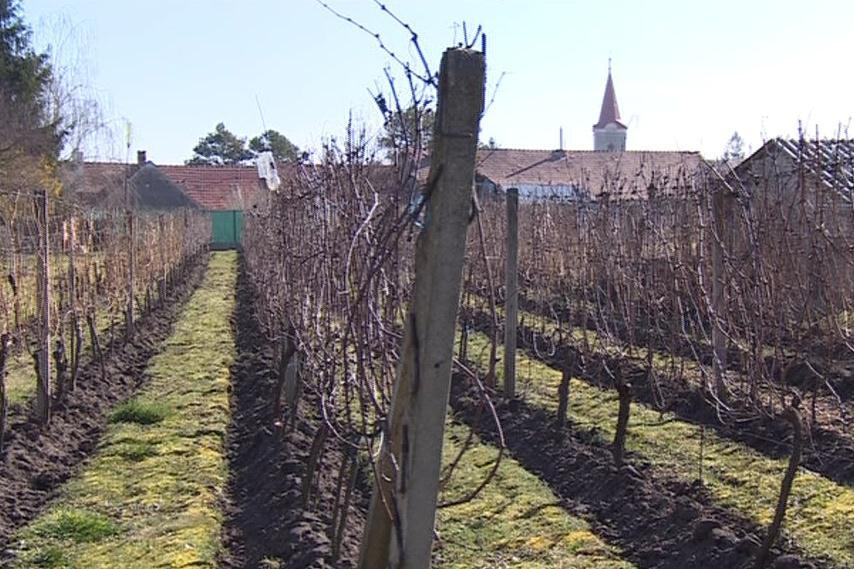 V obci působí řada menších vinařů