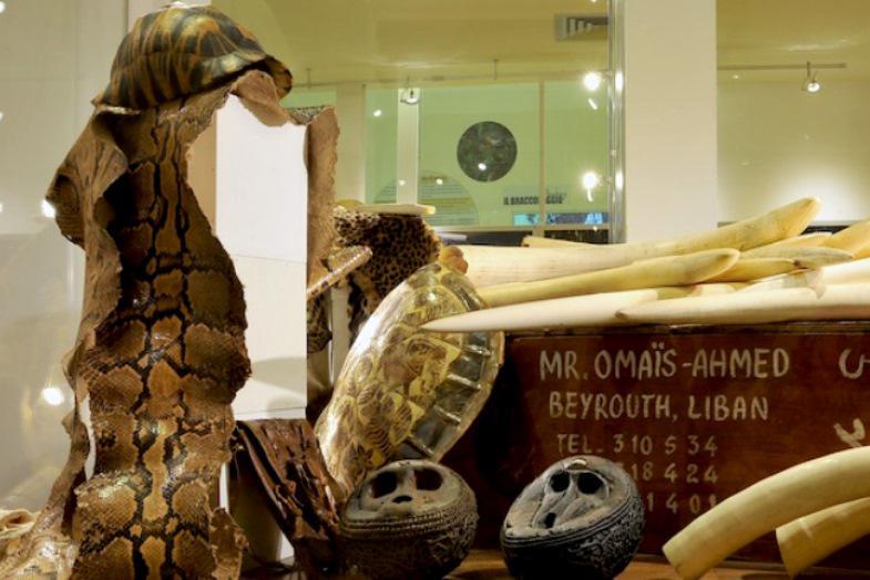 Muzeum environmentální kriminality