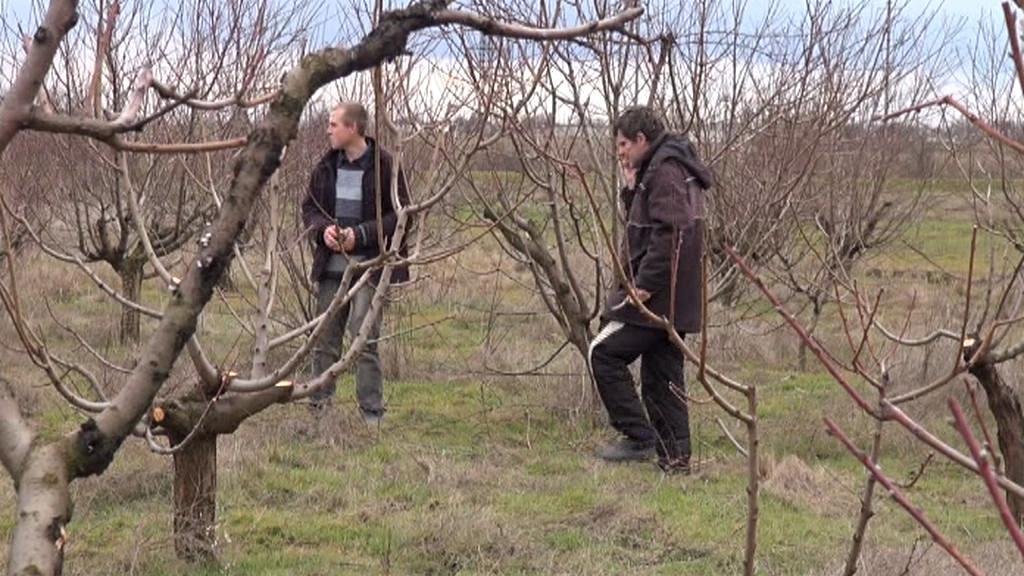 Čechy na Krymu trápí hlavně stav sadu po kruté zimě