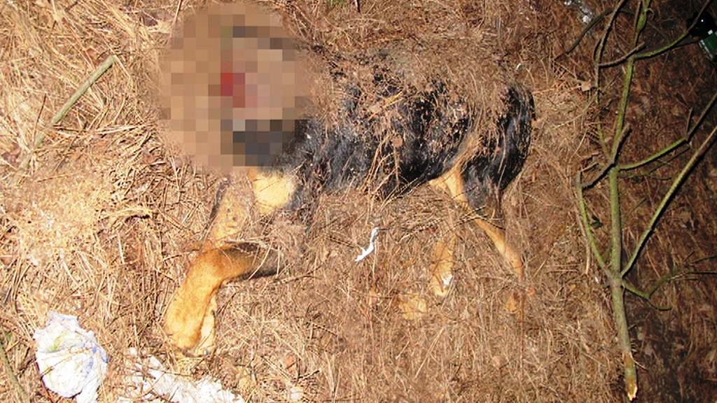 Bezhlavé torzo psa nalezené v Berouně