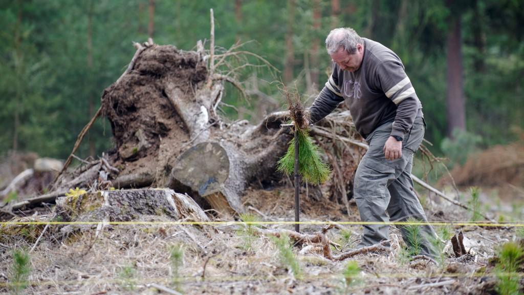 Výsadba nových stromků v Hradci Králové