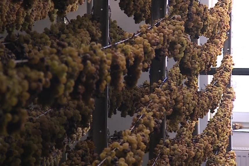 Slámové víno