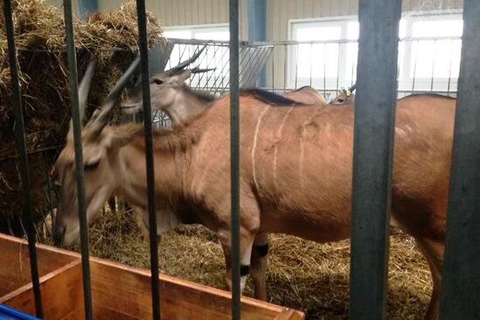 Antilopy v rezidenci ukrajinského prezidenta