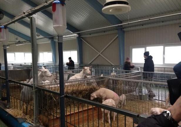 Soukromé zemědělské družstvo prezidenta Janukovyče