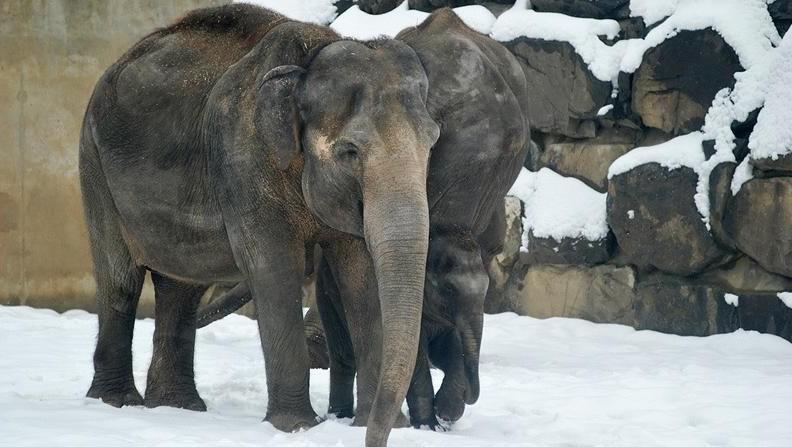 Sloni v ostravské zoo