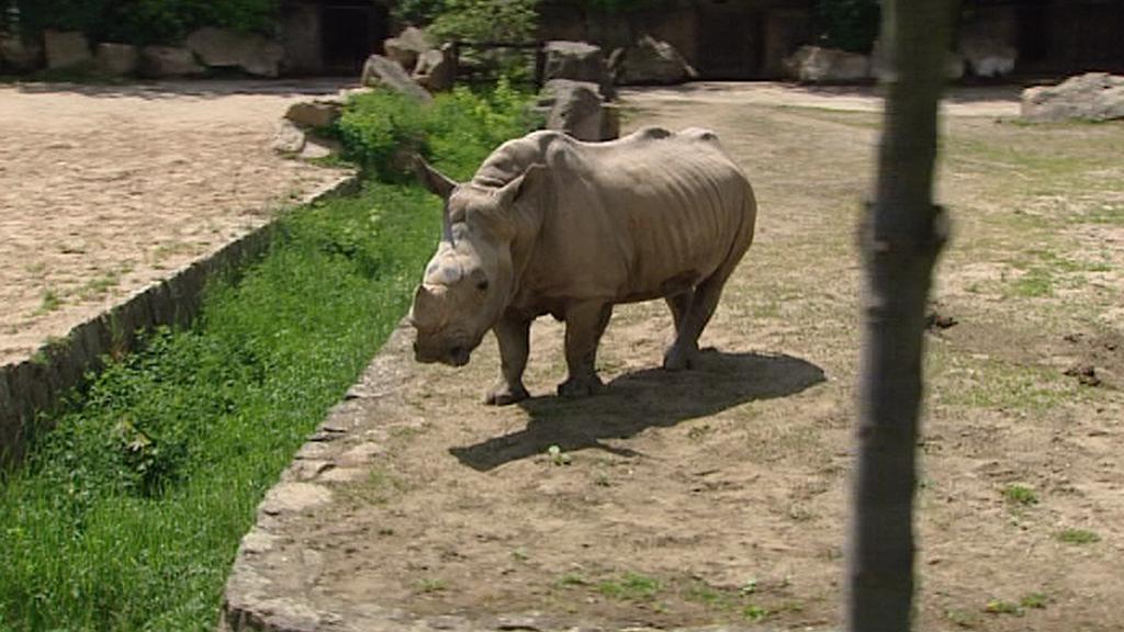 Safari ve Dvoře Králové