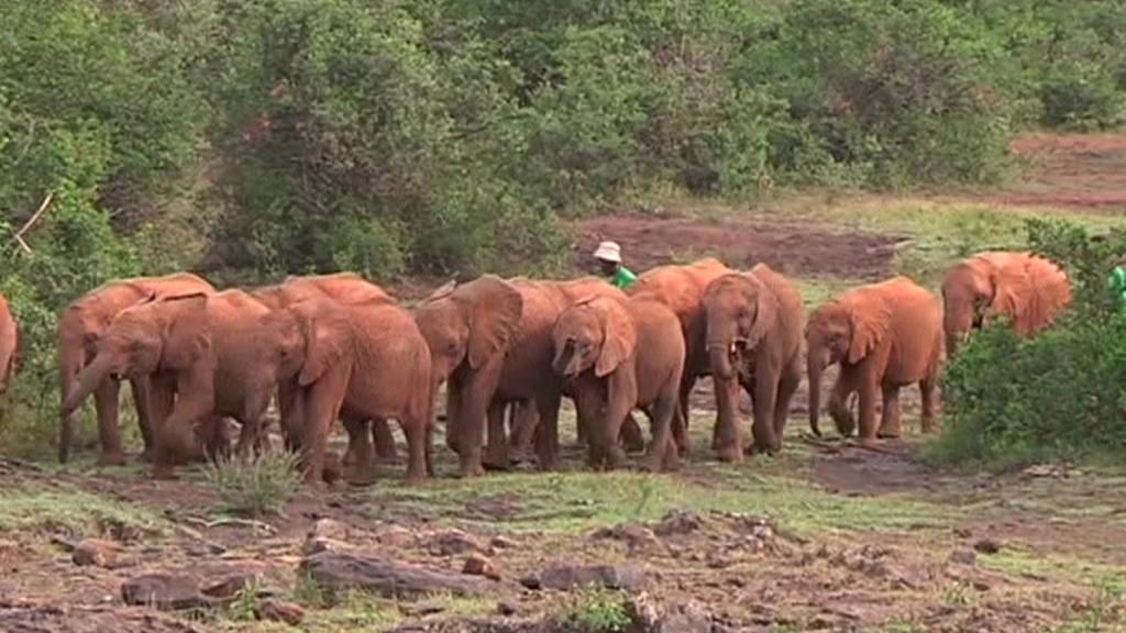 Sloní sirotčinec v Keni