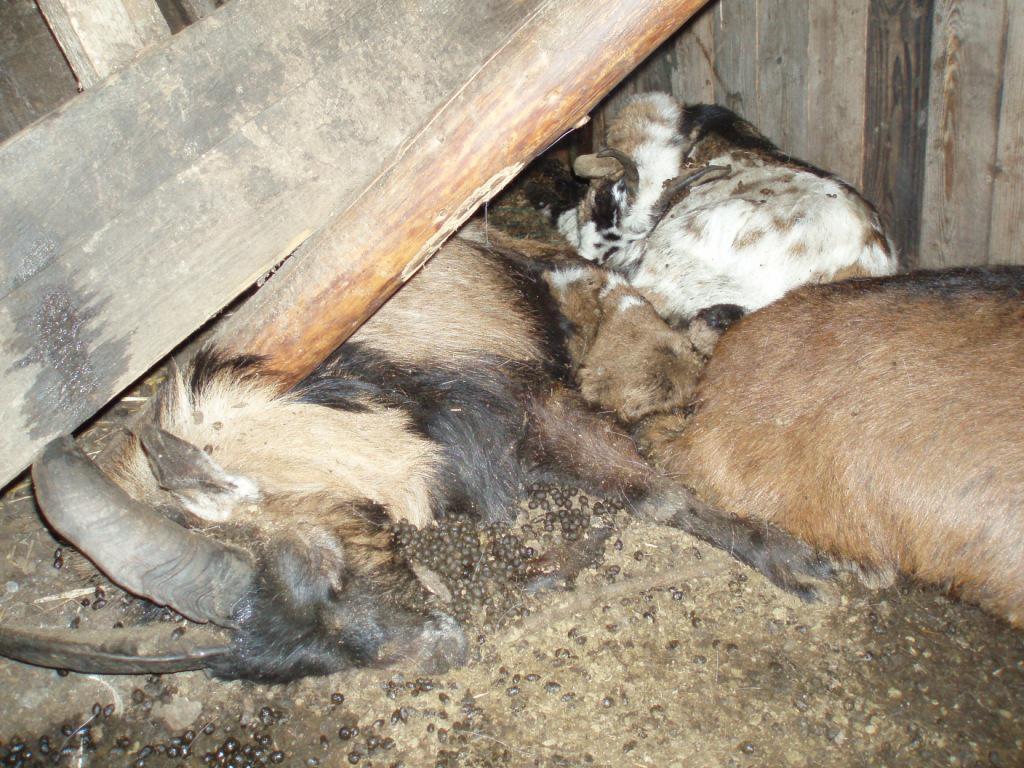 Některá zvířata už byla po smrti