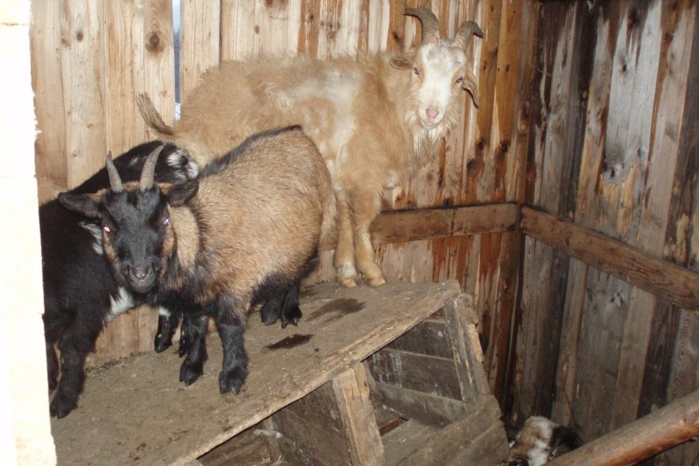 Podnět o týrání poslali lidé ochráncům zvířat