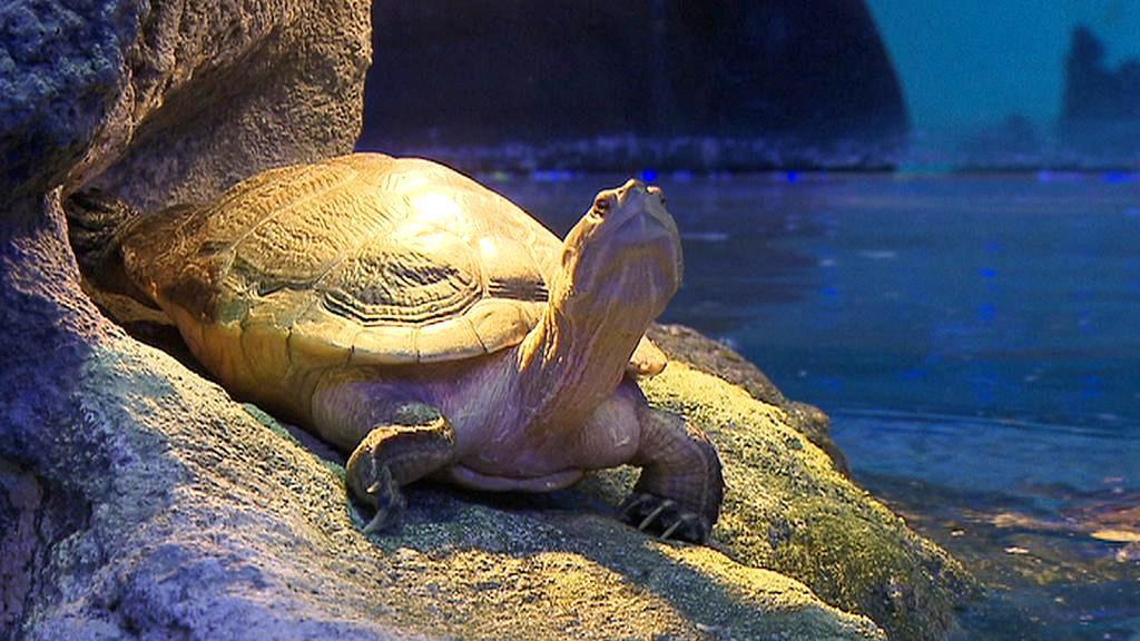 Želva v Mořském světě