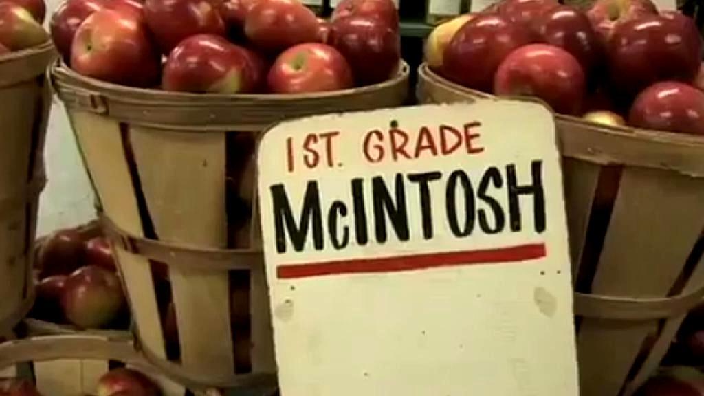 Jablko odrůdy McIntosh