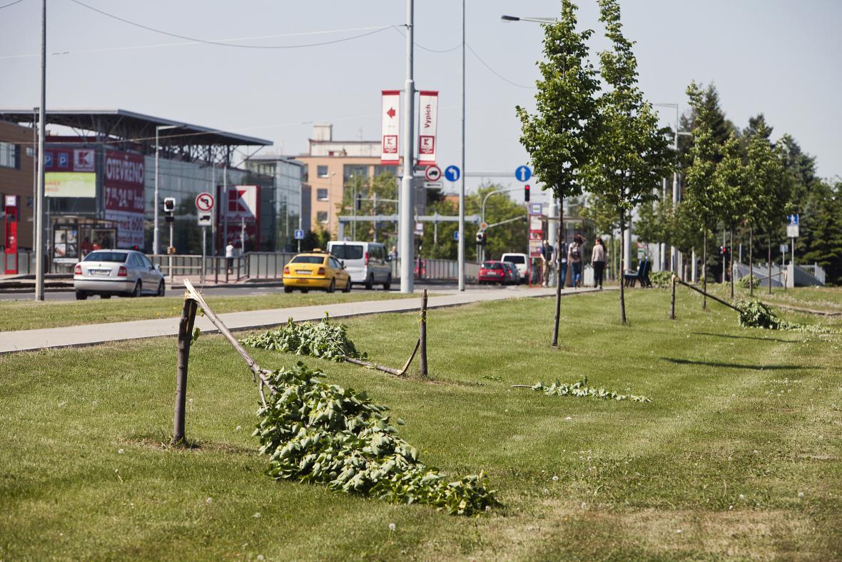 Vandalové ničí stromy v centru města