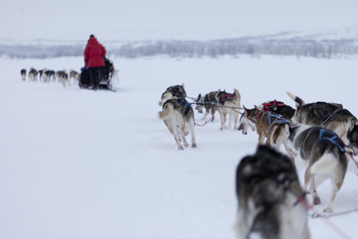 Musheři v Laponsku