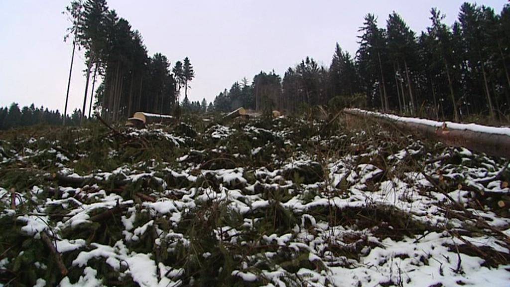 Paseka nad Brnířovem