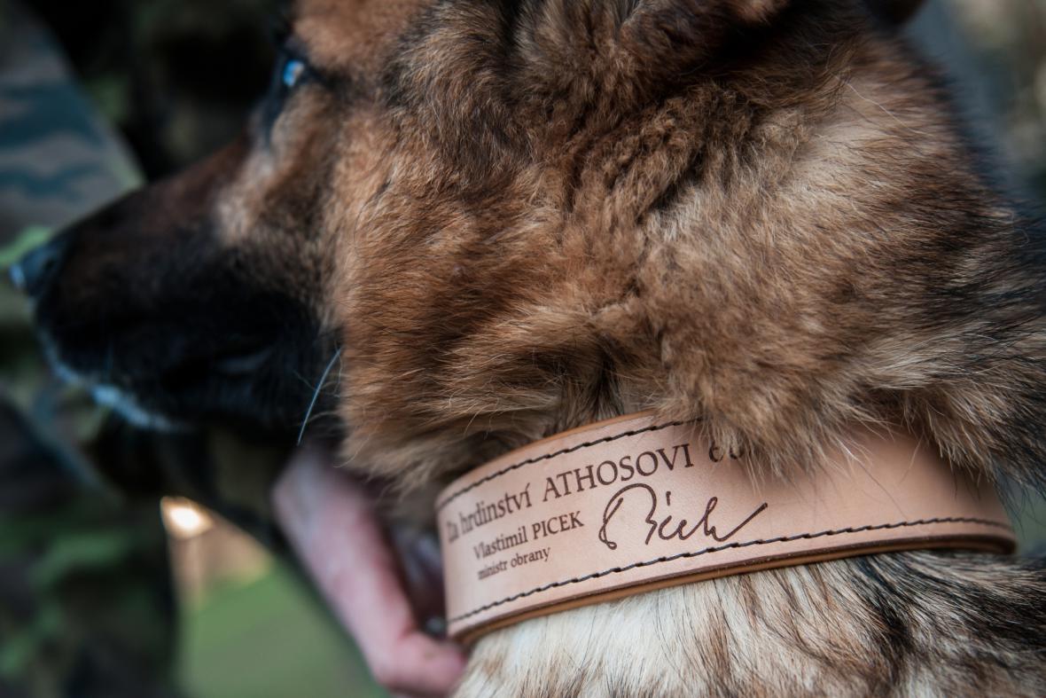 Oceněný německý ovčák Athos