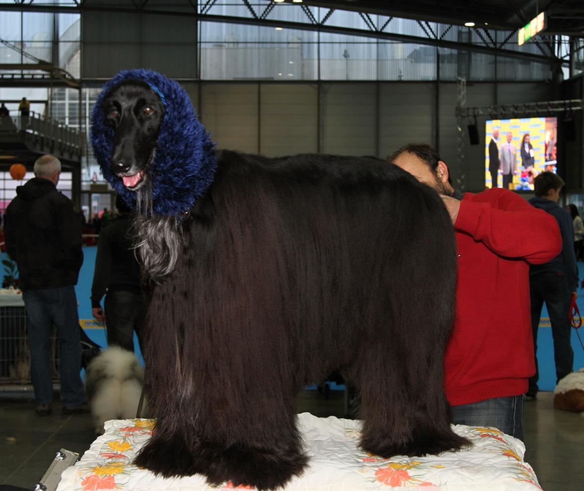 Výstava psů v Brně