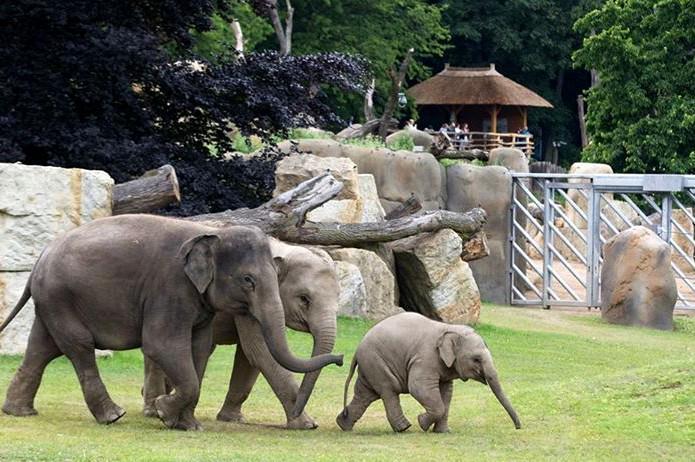 Údolí slonů