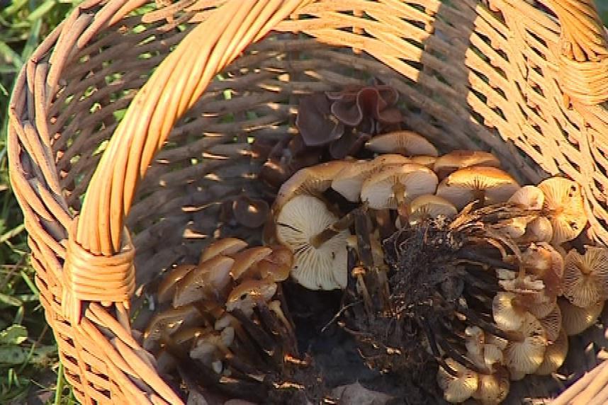 Zimní houby