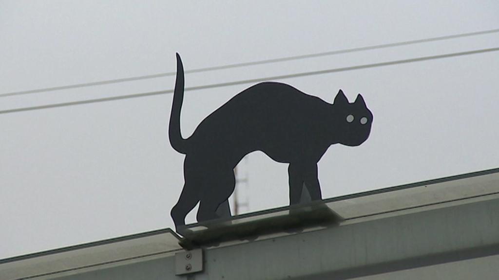 Černé kočky v ulicích Olomouce